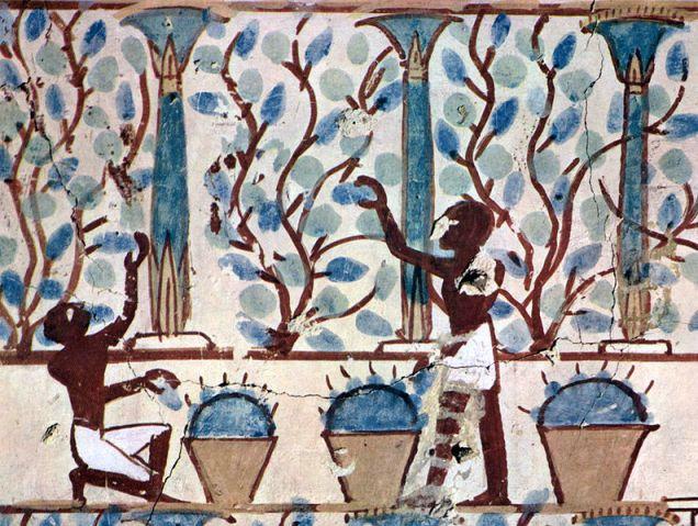 Conreant el Raïm per fer el vi. Maler der Grabkammer des Nebamun